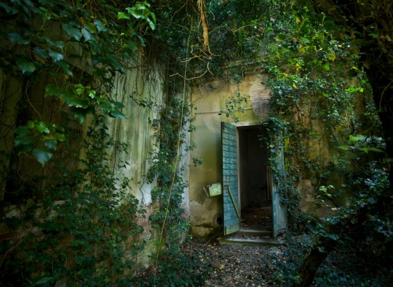 italy haunted poveglia vegetation growing wild