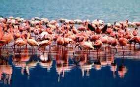fenicottero-rosa-sicilia-pink-flamingo-sicily